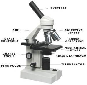 compound microscope basics. Black Bedroom Furniture Sets. Home Design Ideas